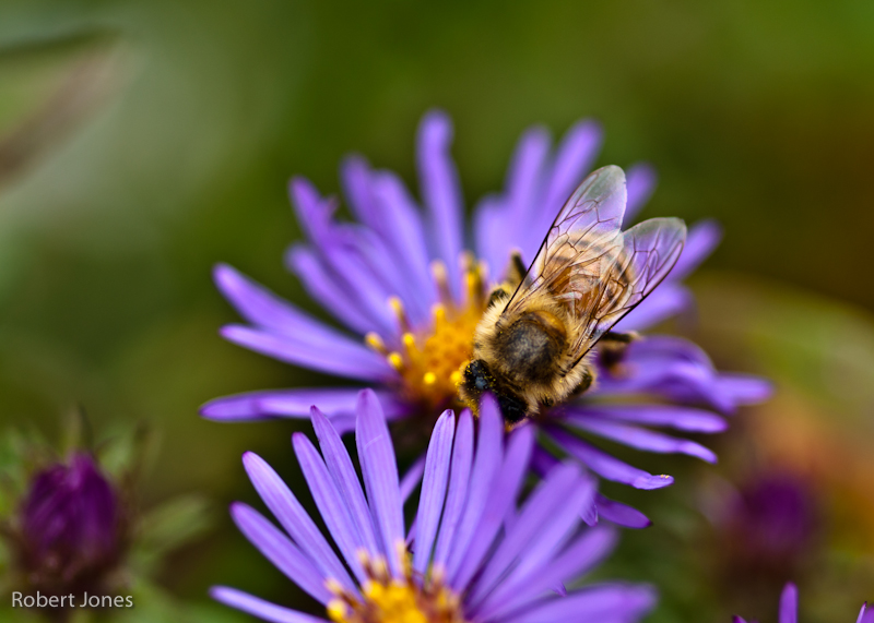 20101007195513_pollenation