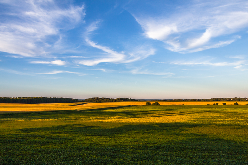 Fields of Gold and Green