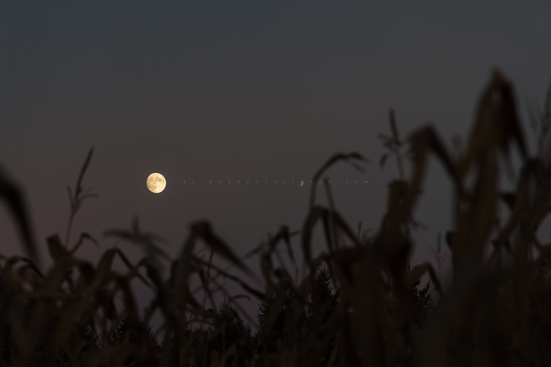 Moonrise Over Corn
